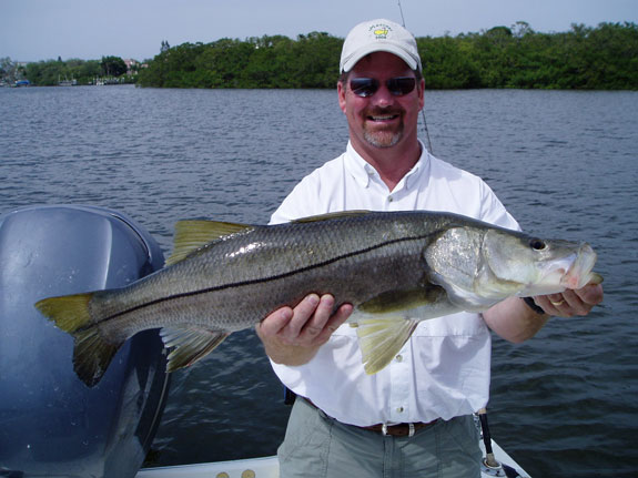 Anna maria island fishing charters with capt tom chaya for Snook fishing florida